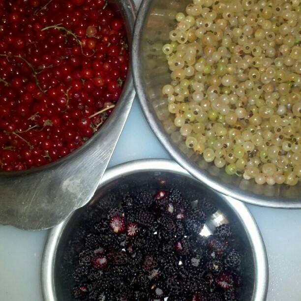 Red & White Currants, Black Raspberries