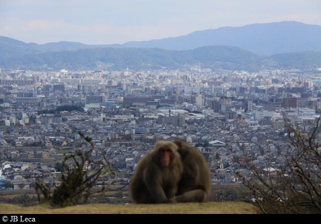 City & The Monkeys