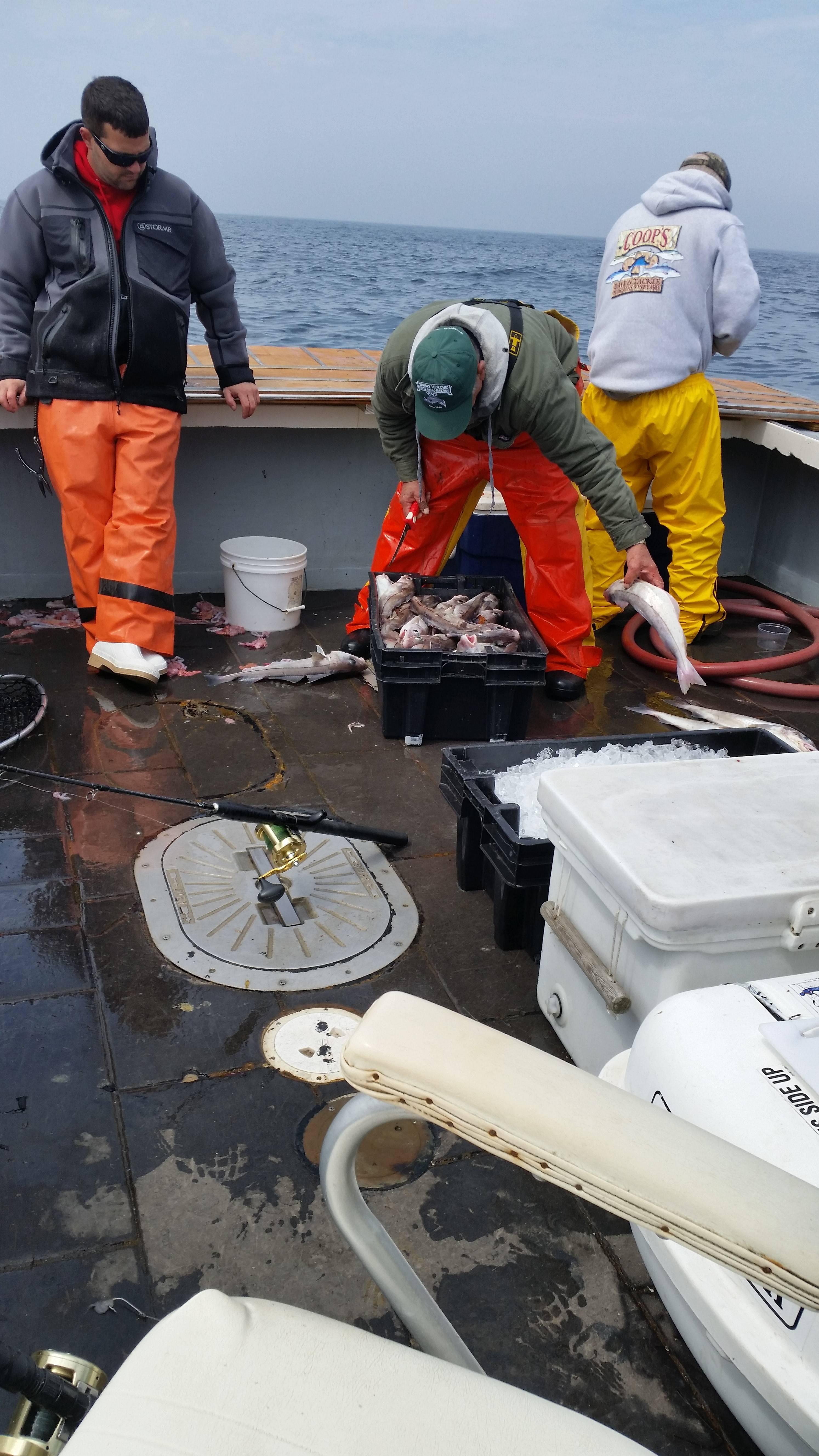 haddock fishng