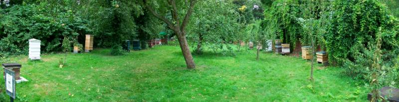 Apiary in Morden Hall Park