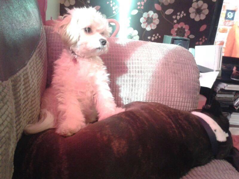 Pet sitting for Honey & Dolly