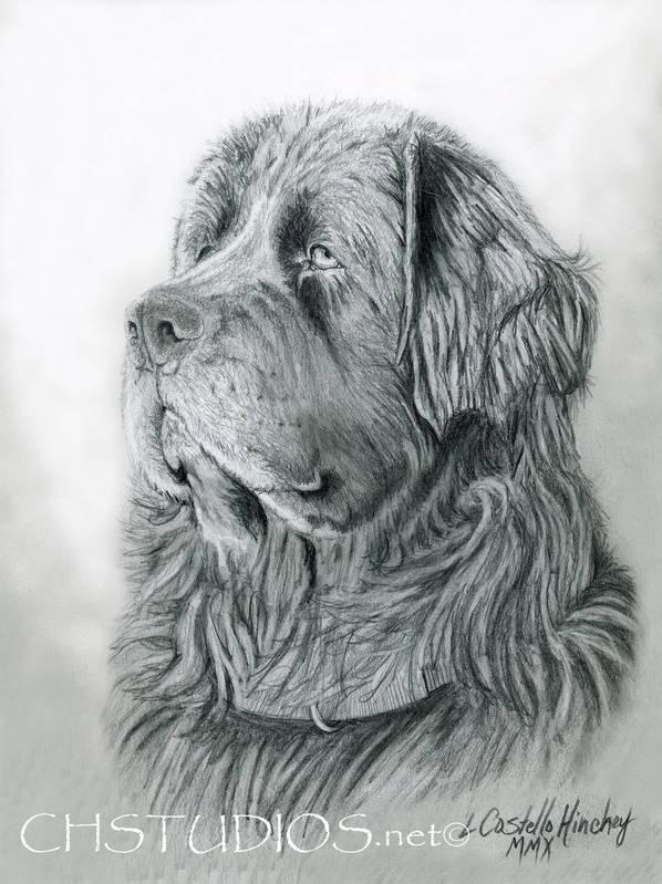 Newfoundland Pet Portrait Commission