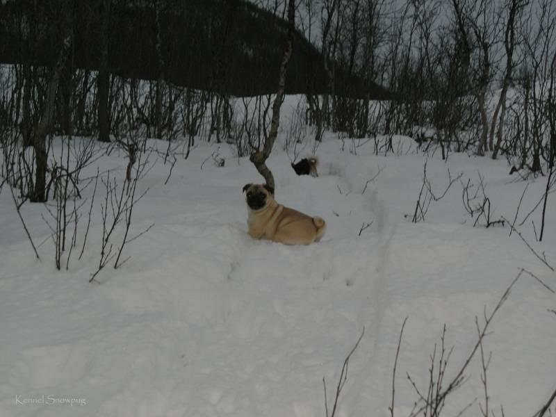 Hundene koser seg i snøen