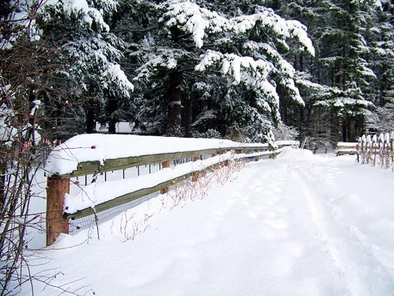 The Sheep Pen Garden on Christmas Day 2008