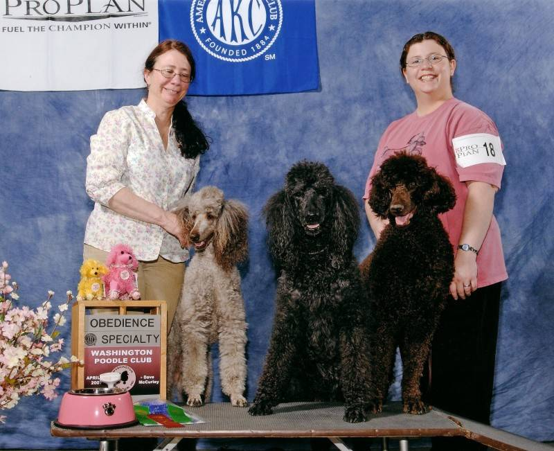 Amber (left), Flash (center), and Penny (right) at the Washington Poodle Club specialty.  4/20/07.