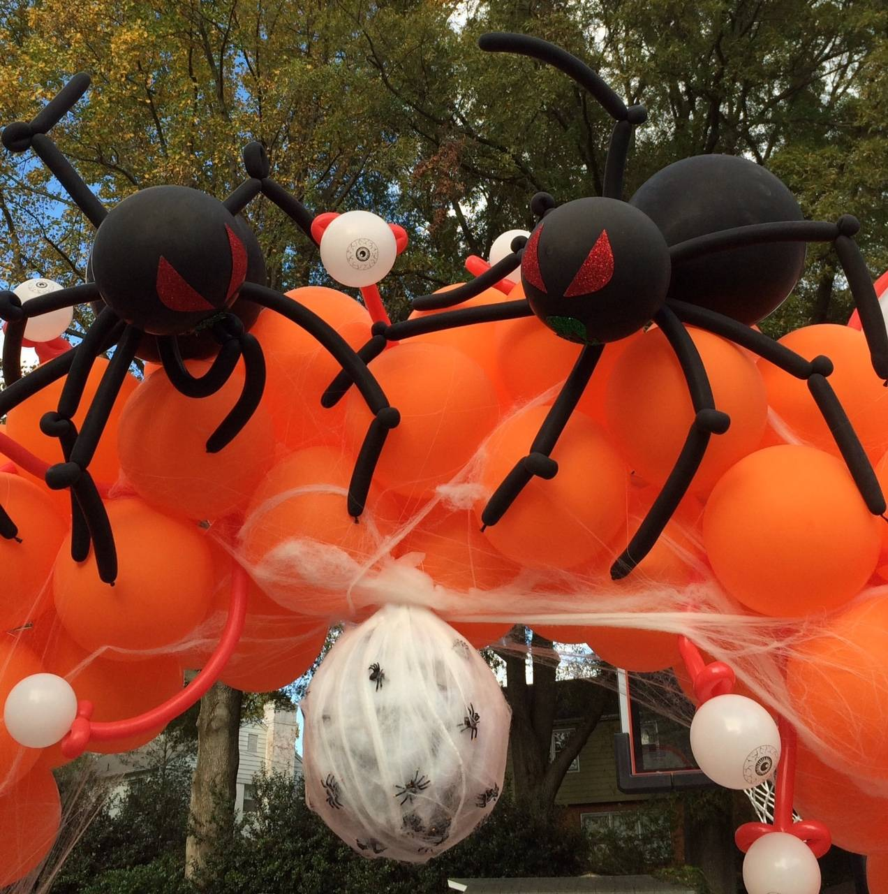 Large Balloon Spiders with Egg Sac