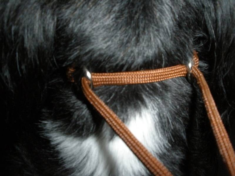 Martingale, correct fit in paracord