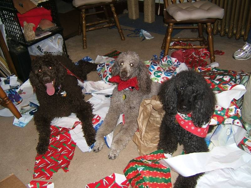 Everyone had fun opening their gifts! (Penny, Amber, Flash) 12/26/06.
