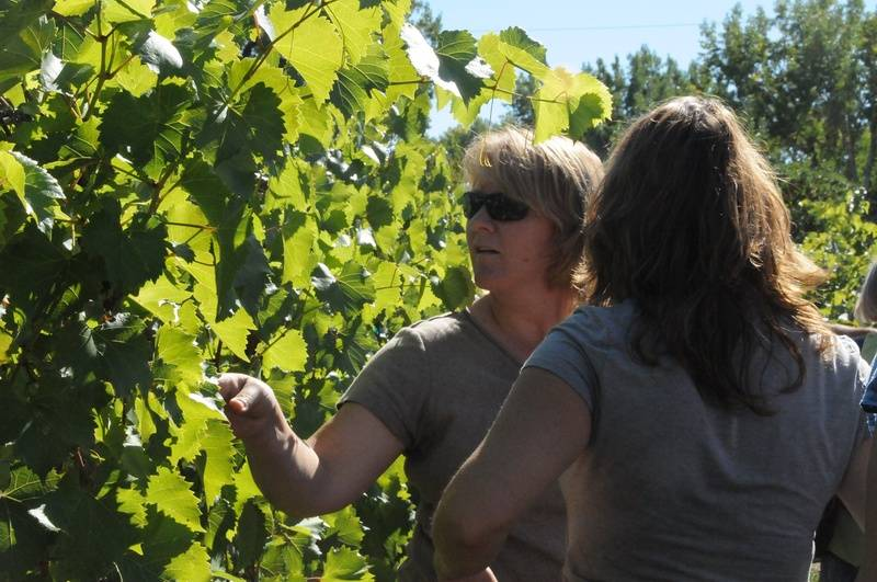 Two guests looking at Riesling vines