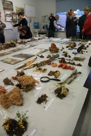 Alison Pouliot Fungi Workshop