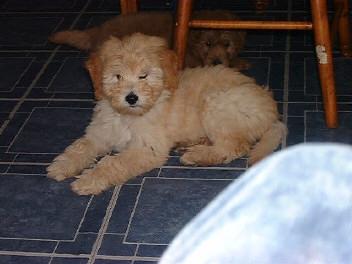 Paiges puppy