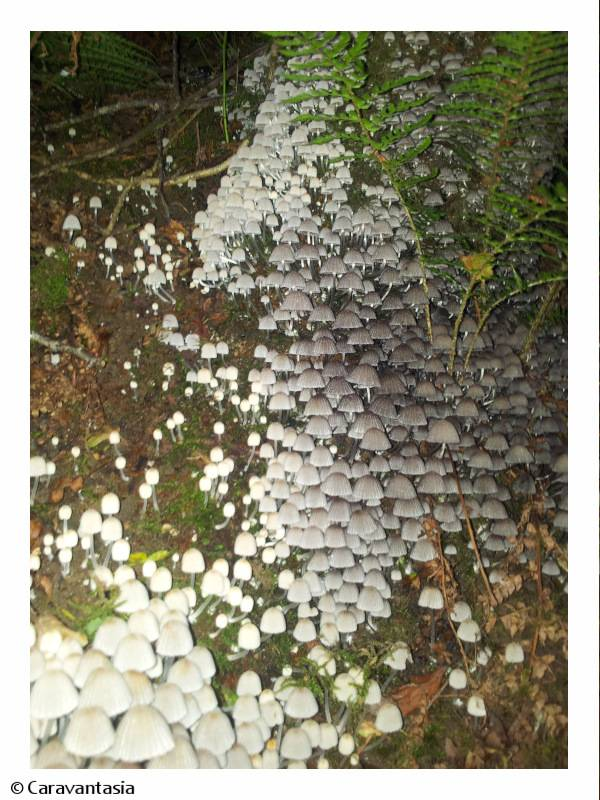Fairy shrooms in the ringfort