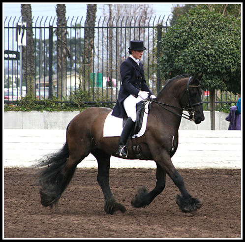 Morjn - 1st lvl Fresian at Equine Affaire