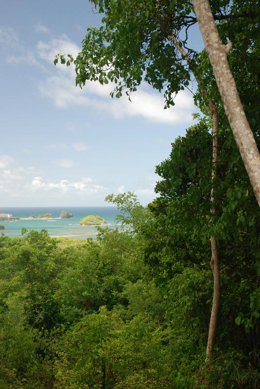 The view from Mamiku gardens