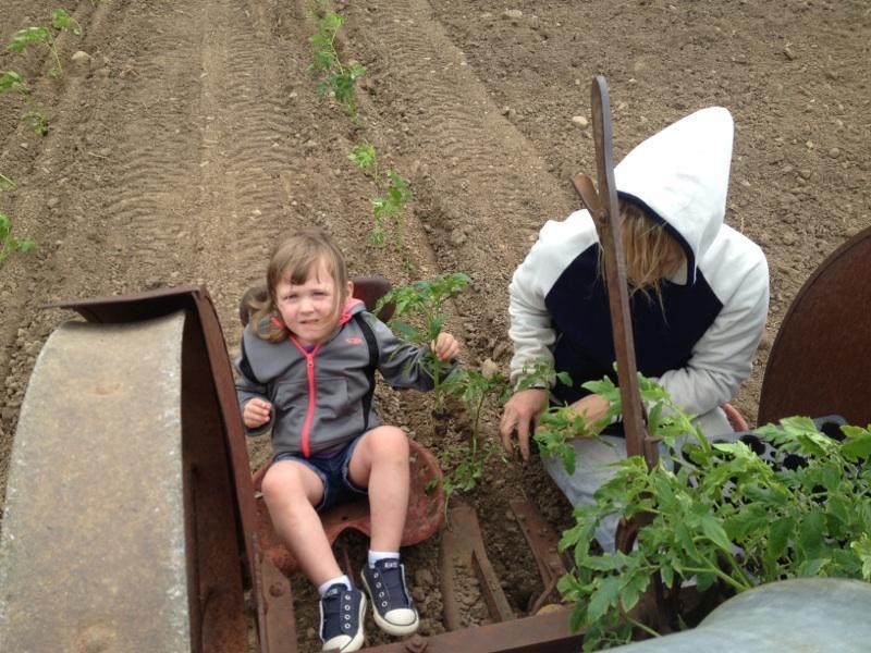 Tranplanting for the growing season