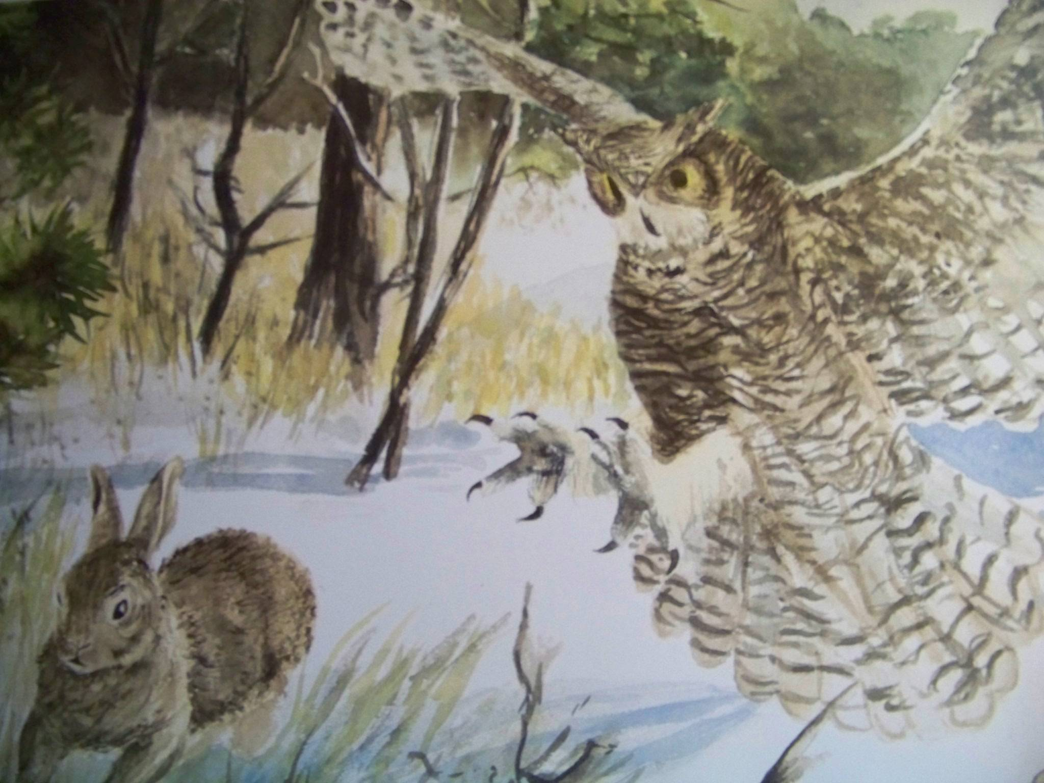Owl chasing rabbit