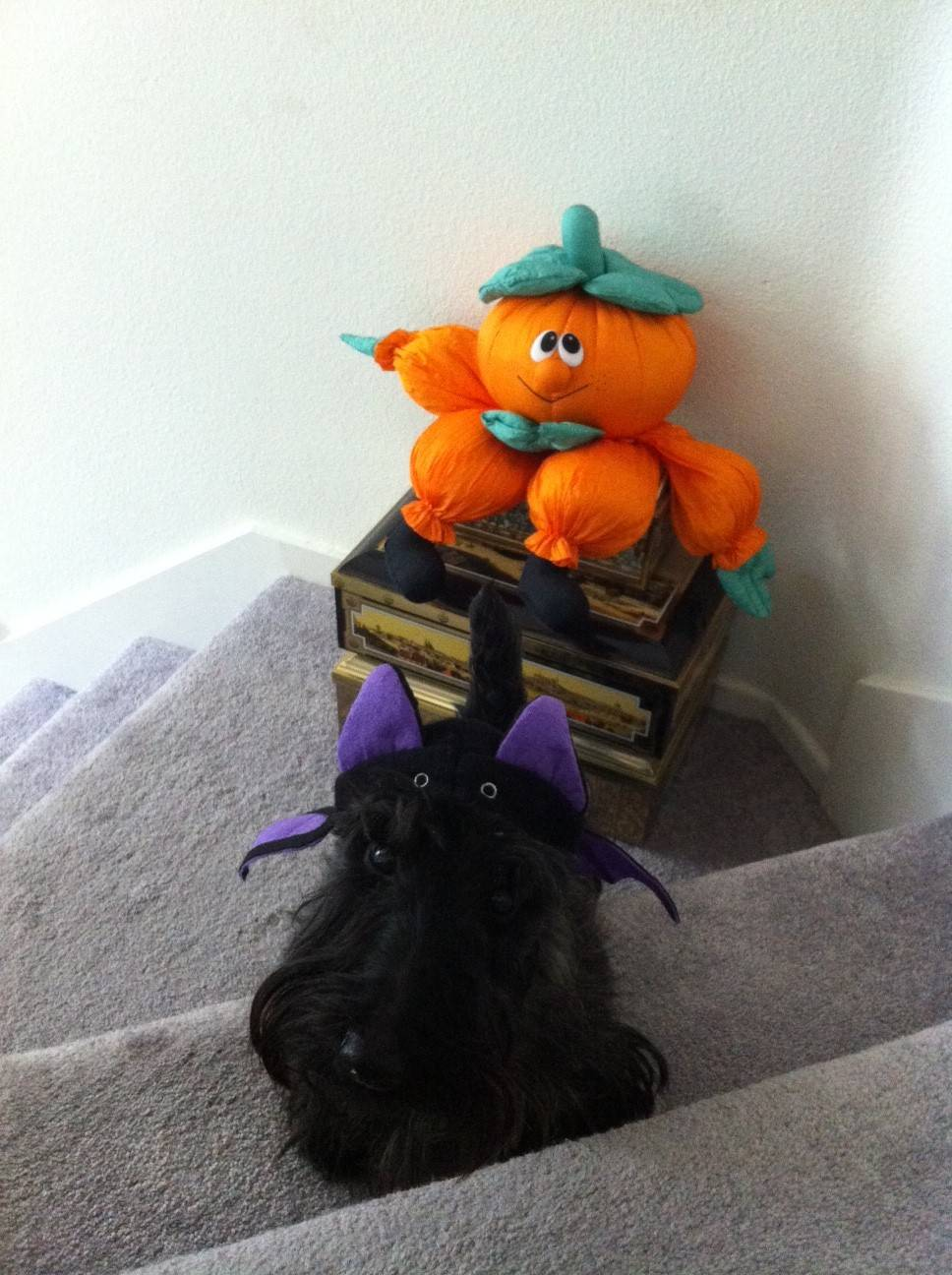 Maisy in her Halloween Costume!