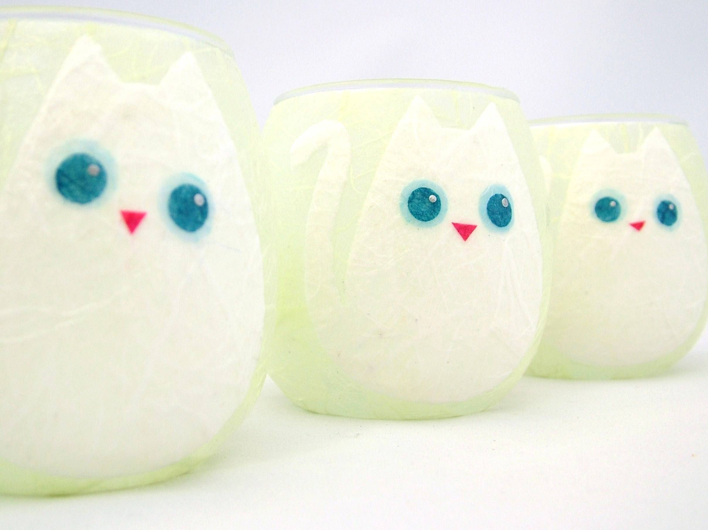 Apple Green and White Cat