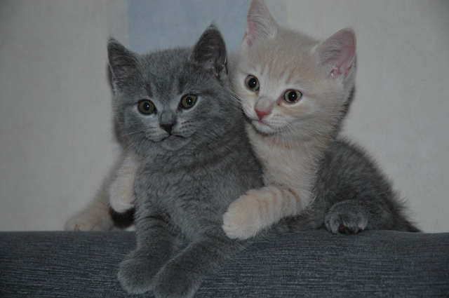 M&M Cats Belgie