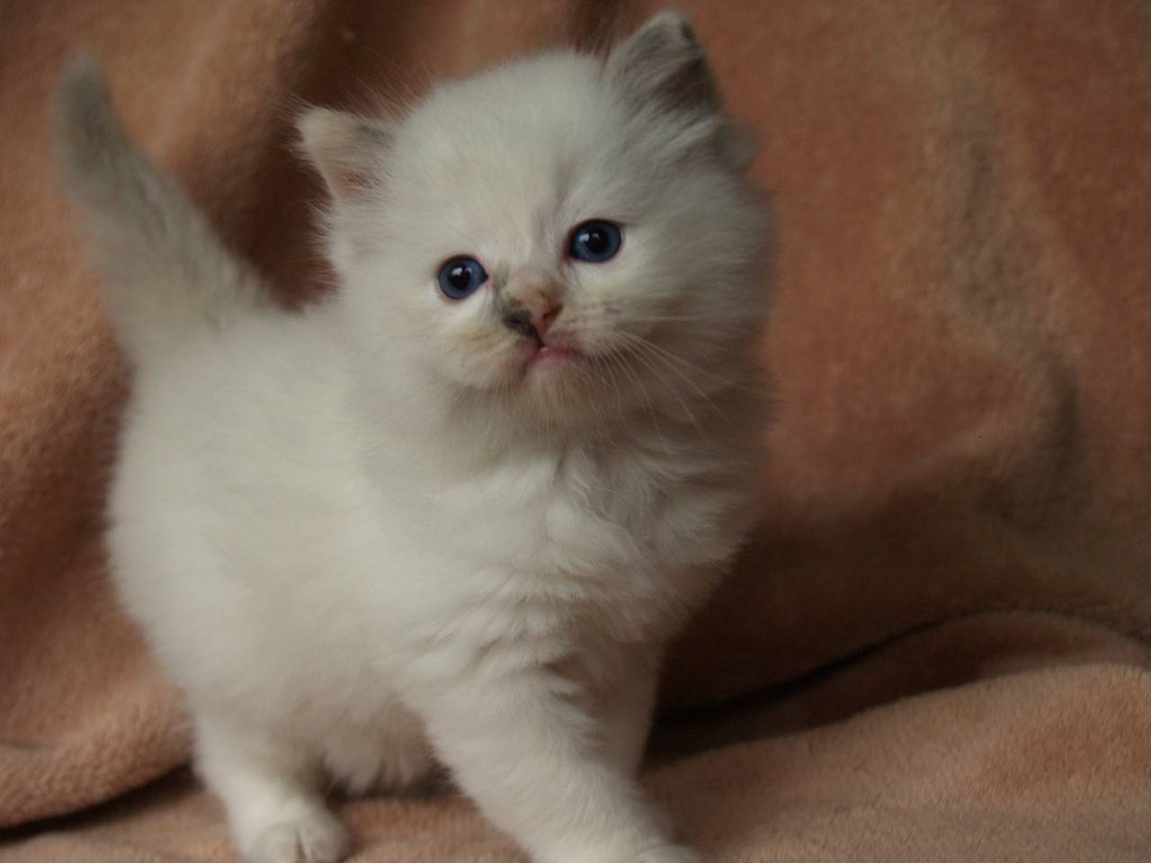 Blue/Cream mitted baby