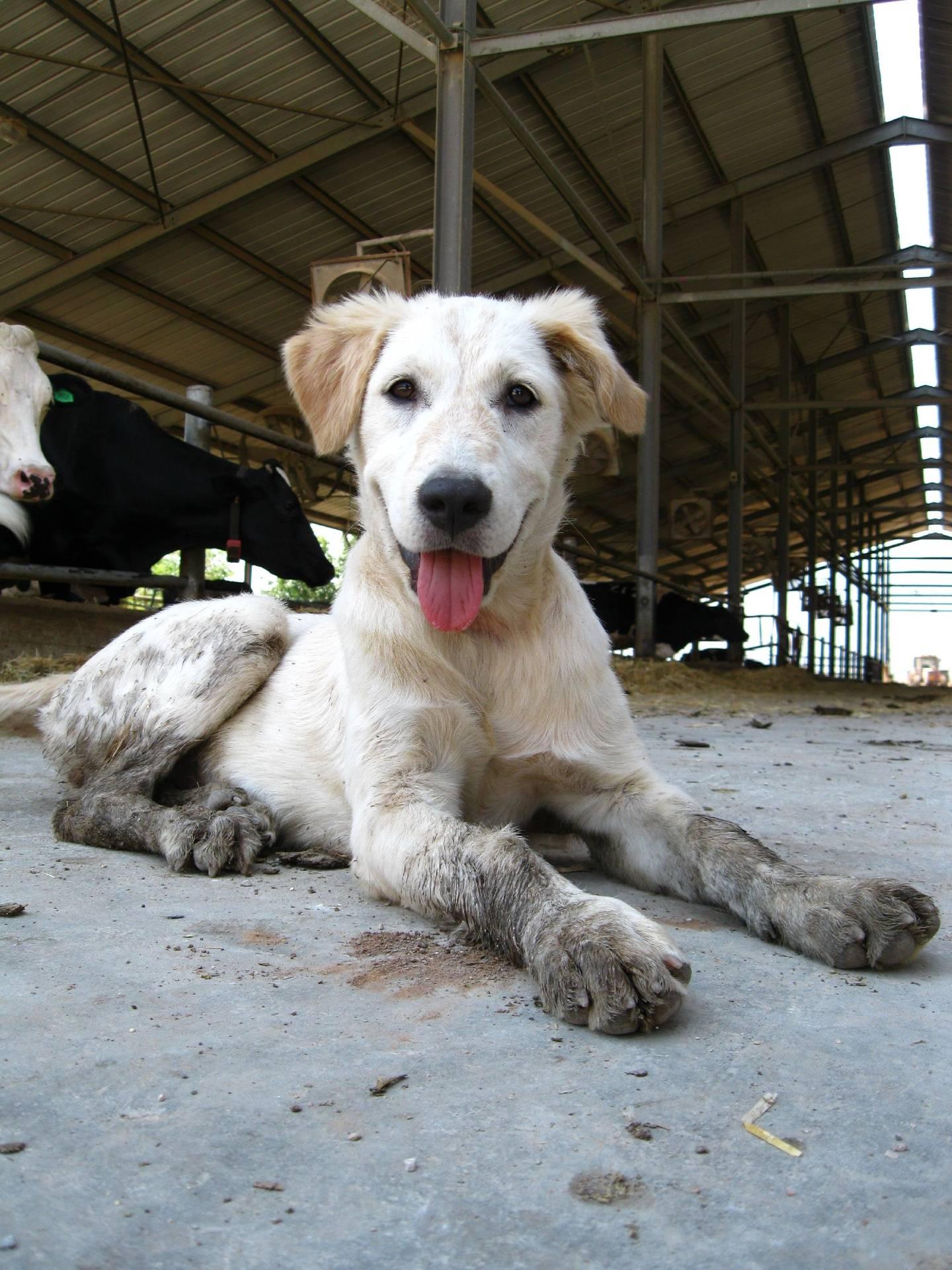 Dirty Puppy 2