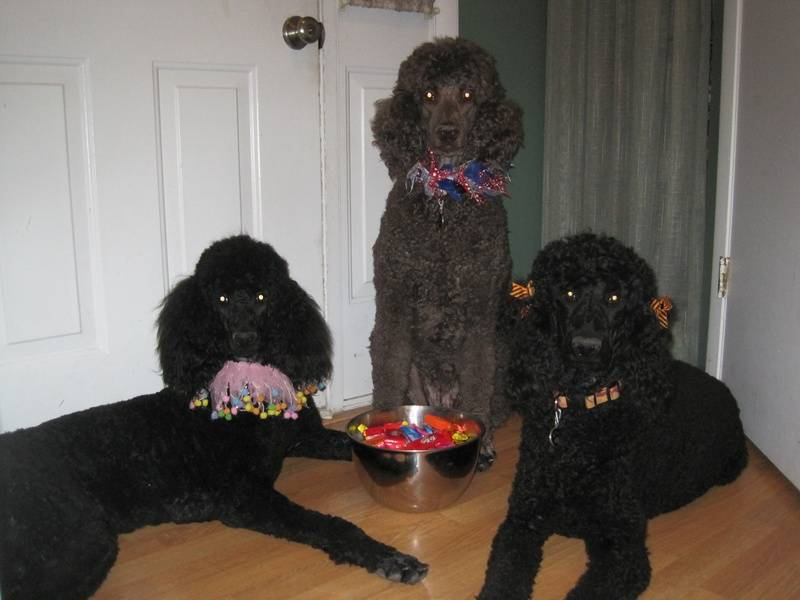 Phoenix, Penny, and Pepper ready to greet Trick or Treaters.  10/31/10.