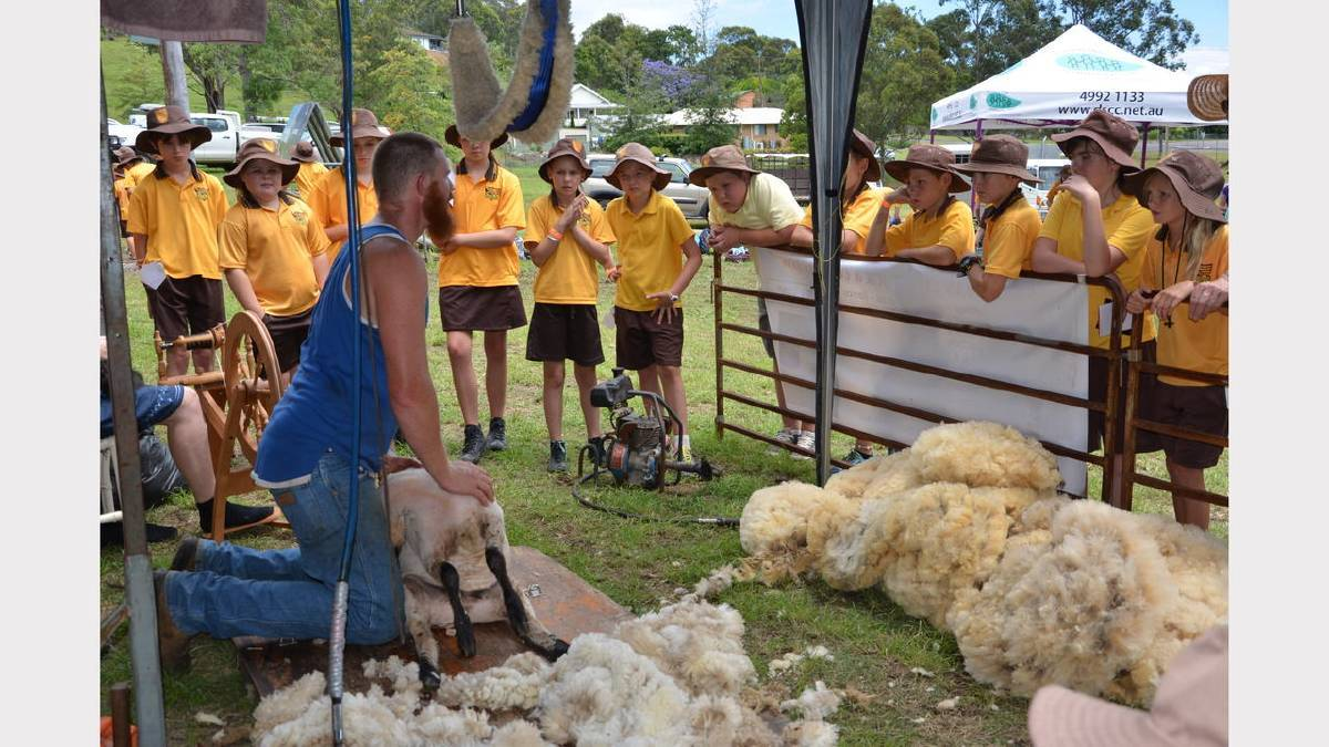 Dungog Show Shearing Demo 2015