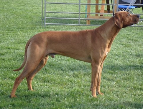 Free standing at the Hound Assoc champ