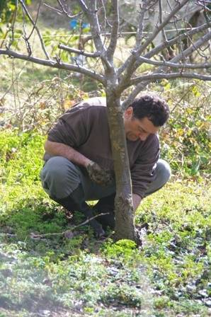 Applying Tree Paste