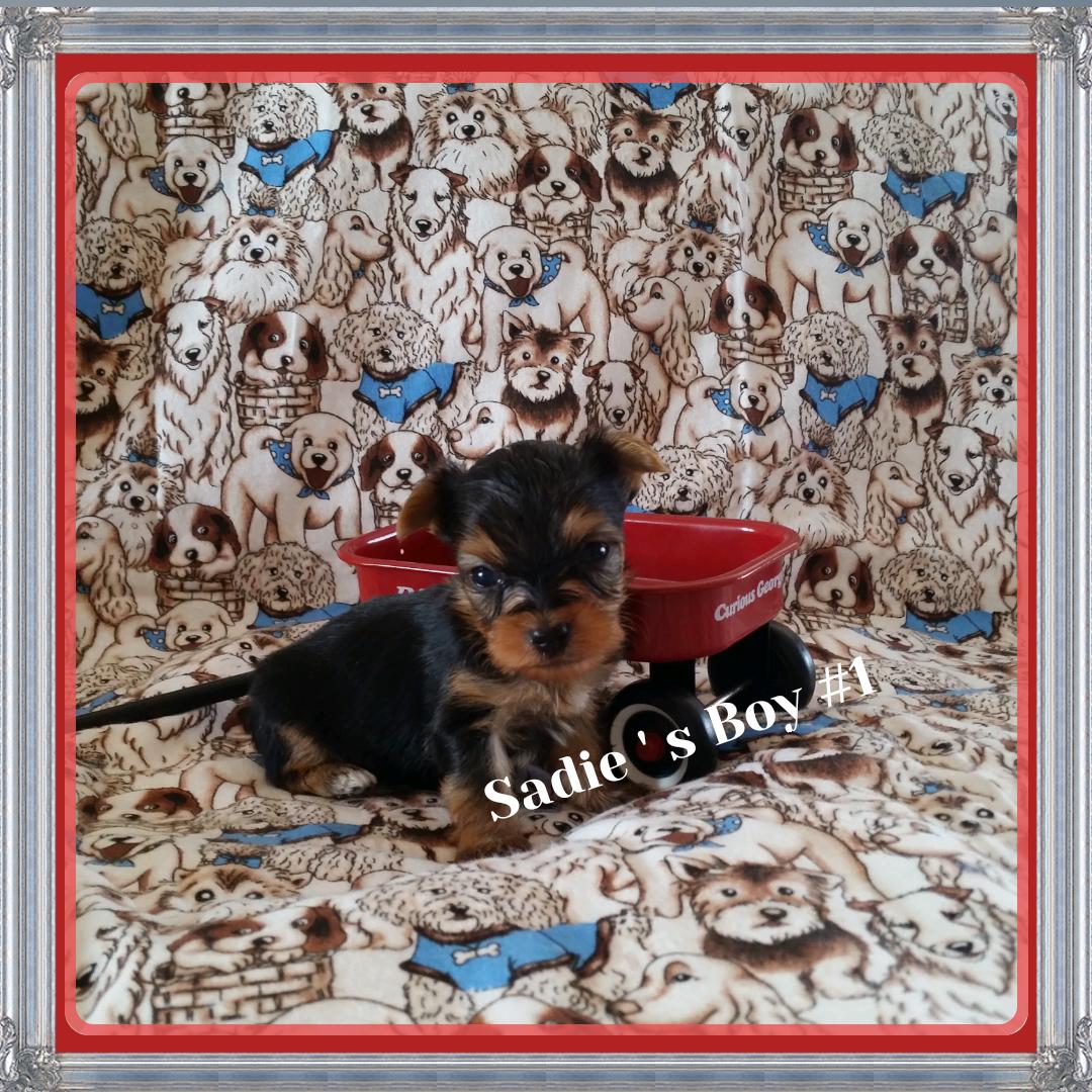 Sadie & Rolex's Boy #1 Born June 15, 2014