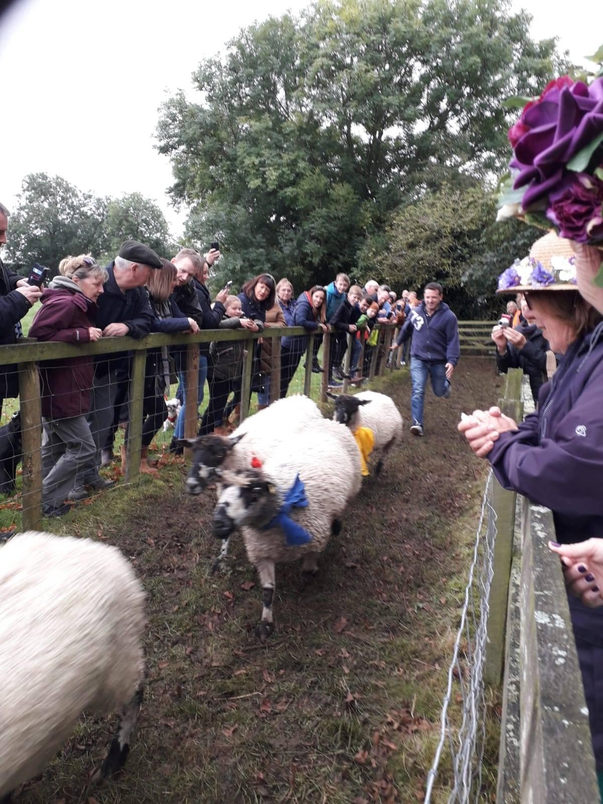 Masham sheep race