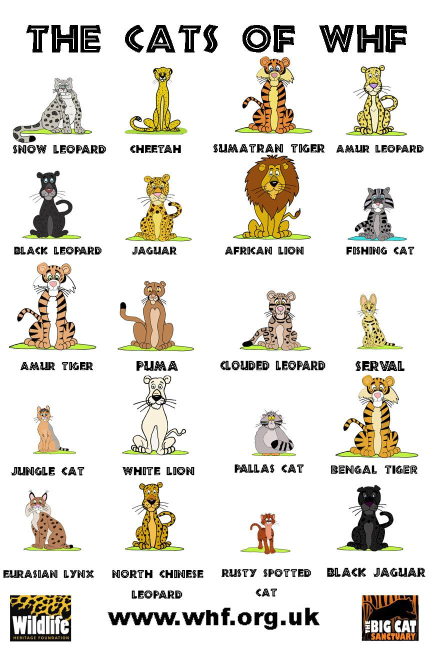 THE CATS OF WHF