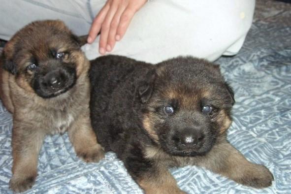 Zac & Sydney - Gabby's babies