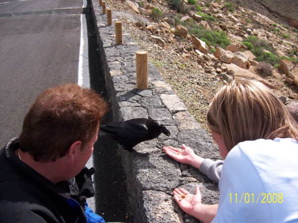 Feeding the ravens in the mountains