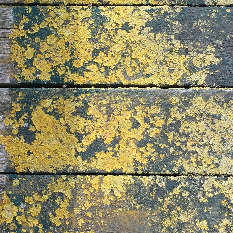 Rainham Marshes abstract photograph