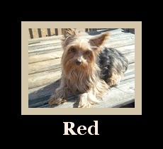 """""""Red"""""""
