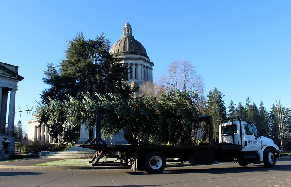 Trucking the tree from Black Lake Trees