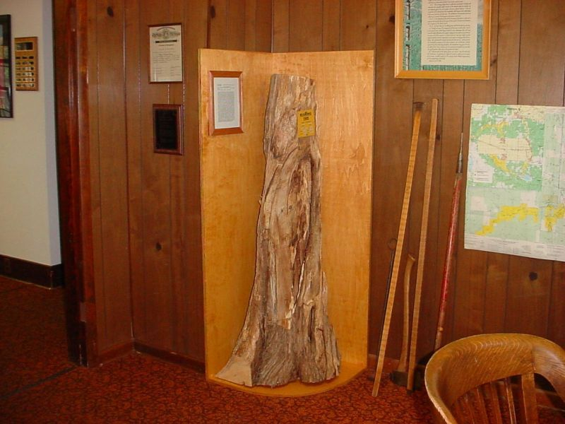 Bearing tree exhibit