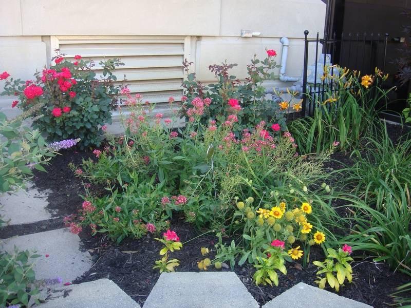 Photo of flowers in one of the gardens on the July 12th tour.