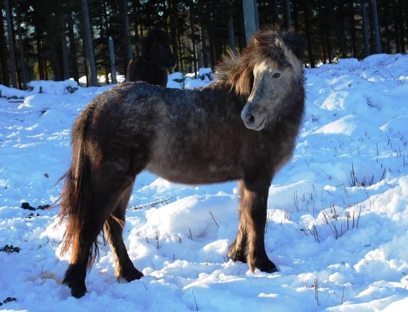 Aura från Solbacka