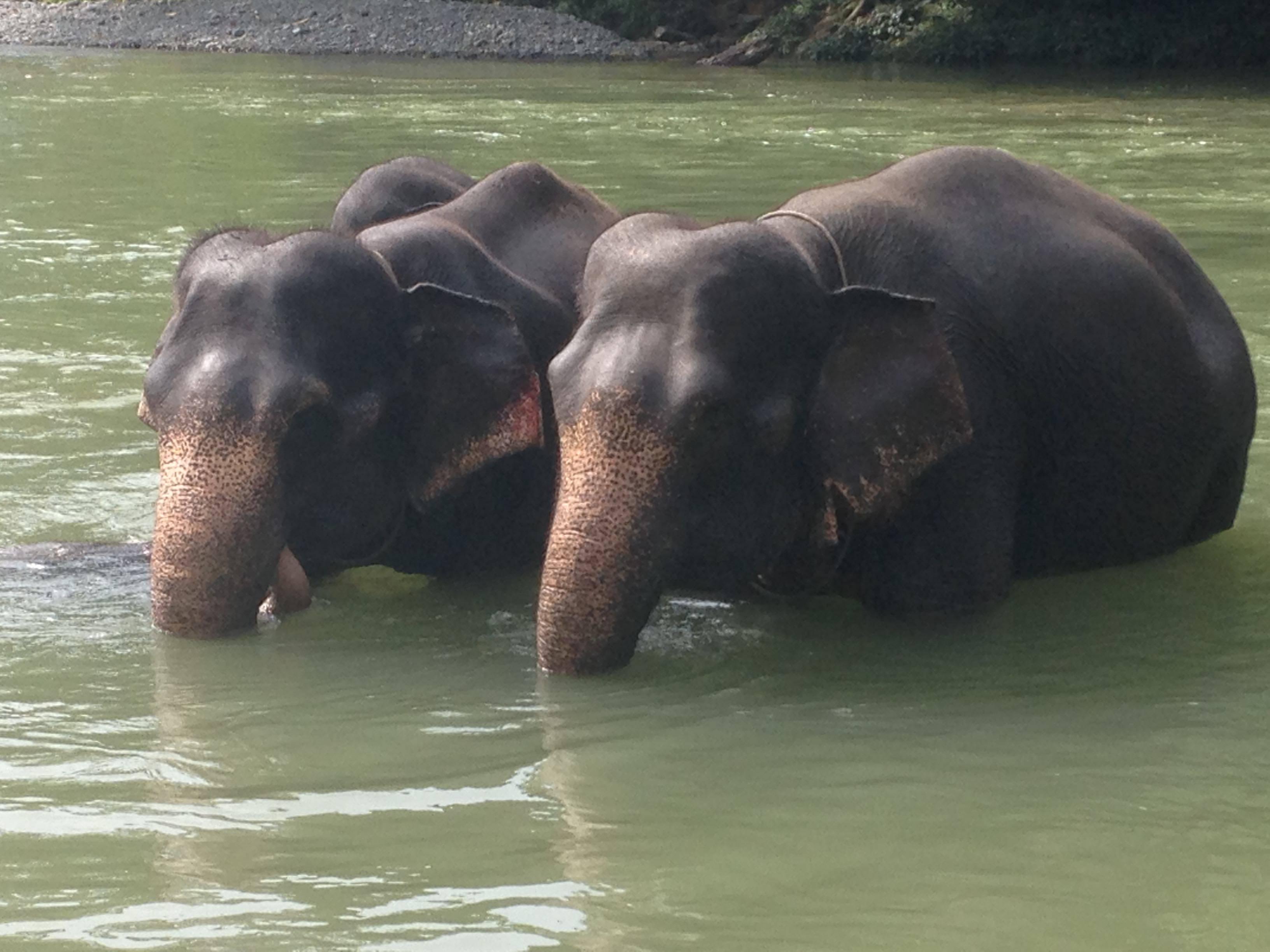 Tangkahan Elephant Sanctuary