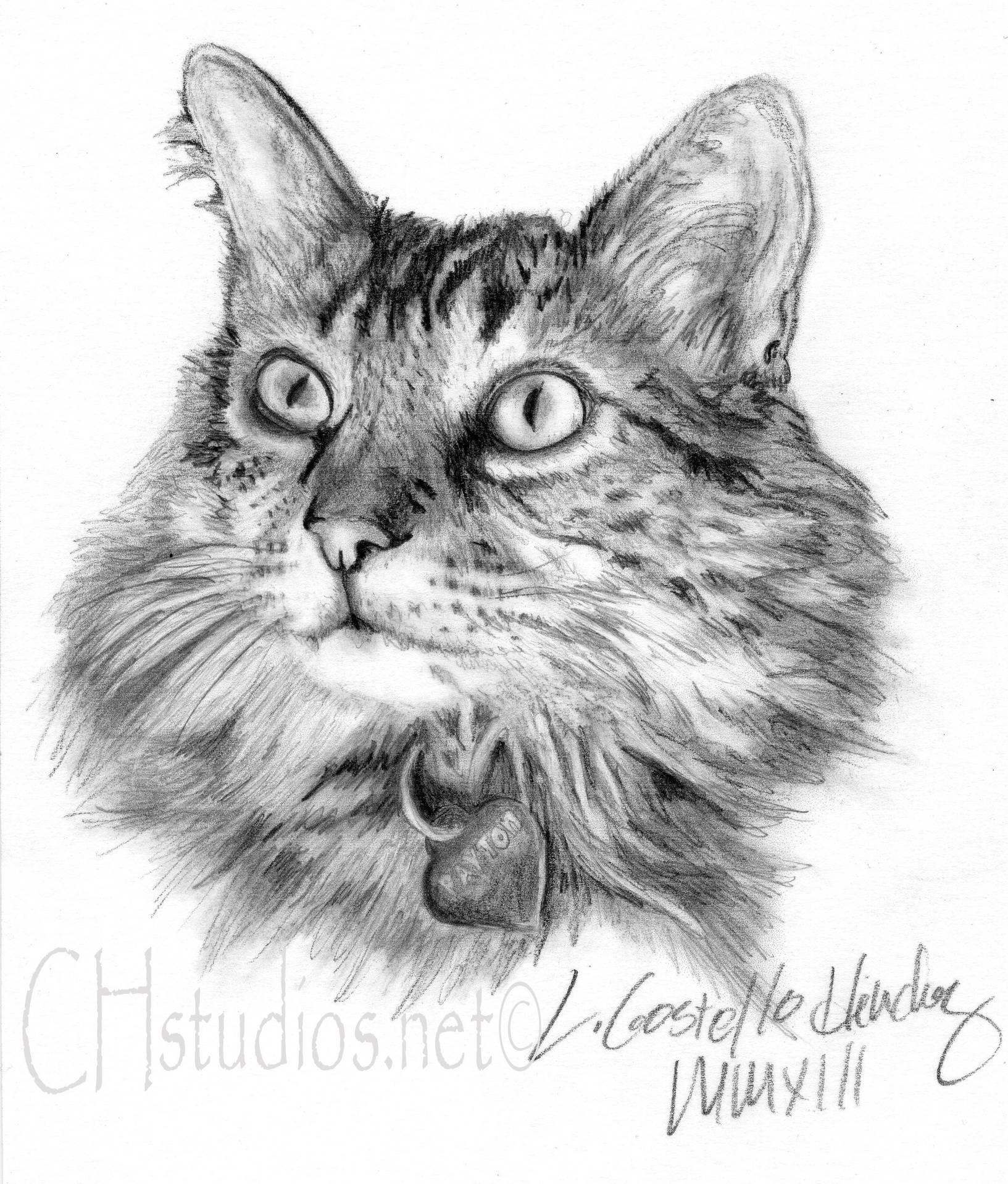 Payton Pet Portrait Commission