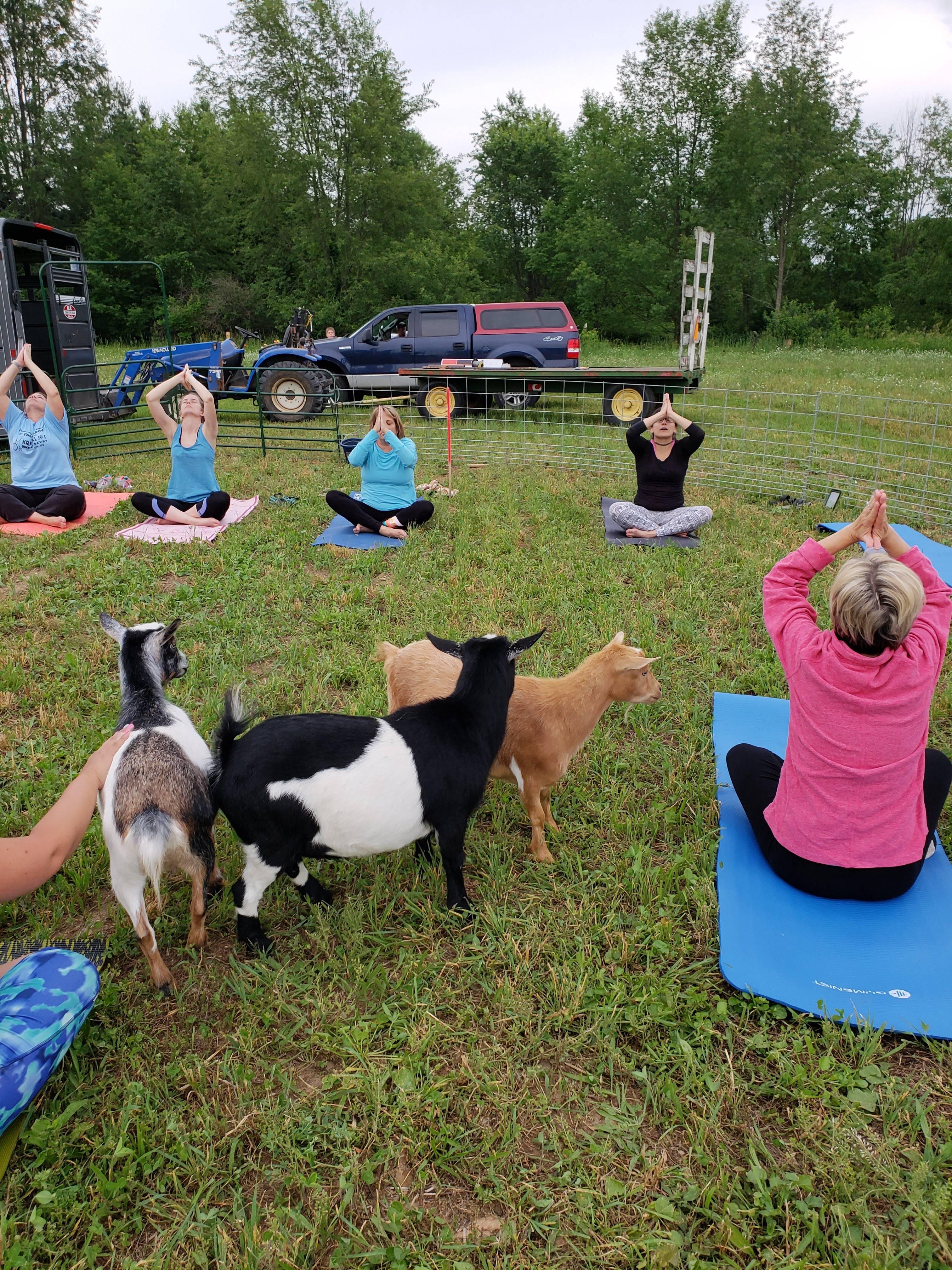 Many Great Yoga Poses