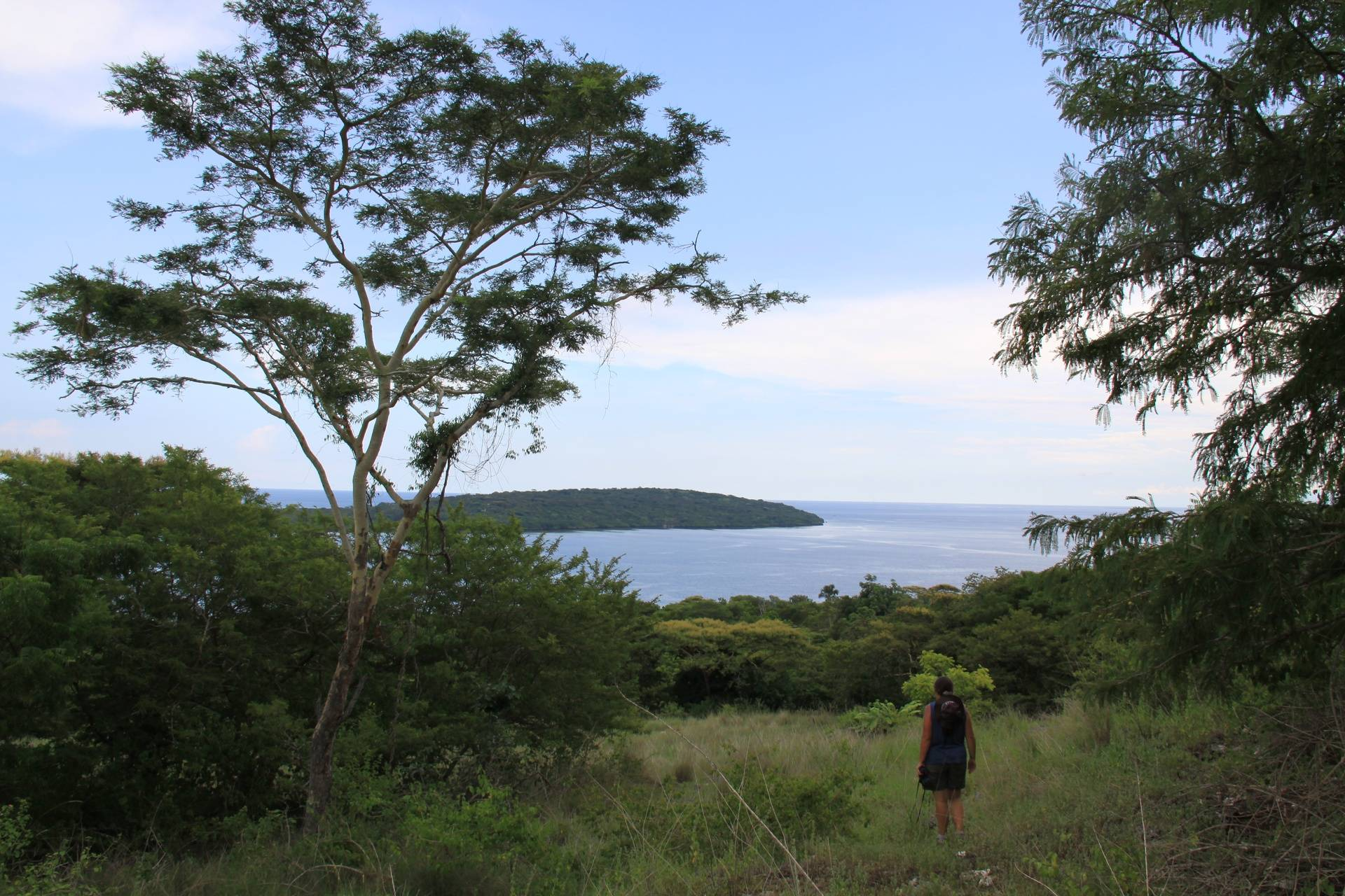 Noëlle Gunst looking for ebony langurs during a transect survey in the Prapat Agung peninsula (West Bali National Park, July 2010)