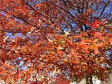 Trees can provide changing color to a landscape year round