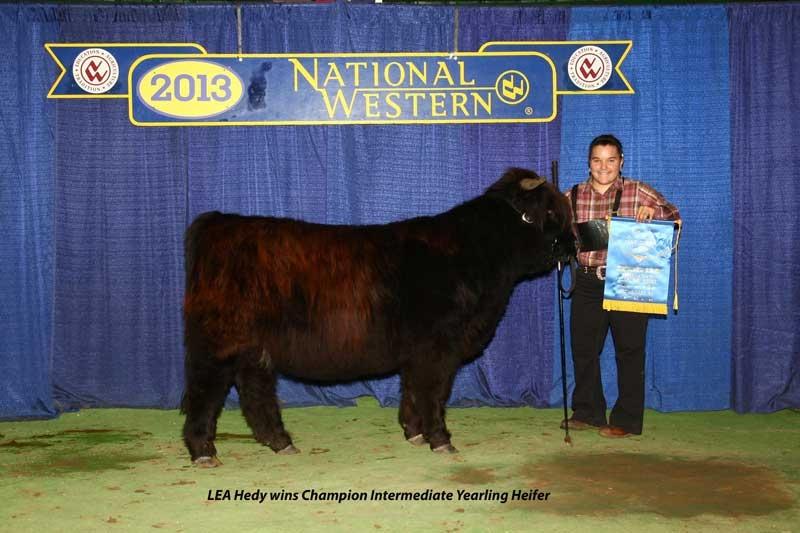 Hedy as Intermediate Yearling Heifer Champ