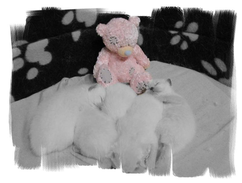 Little pink Ted guarding the babies this time!