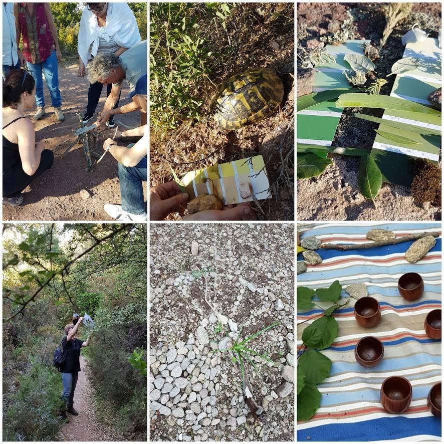 Forêt des maures