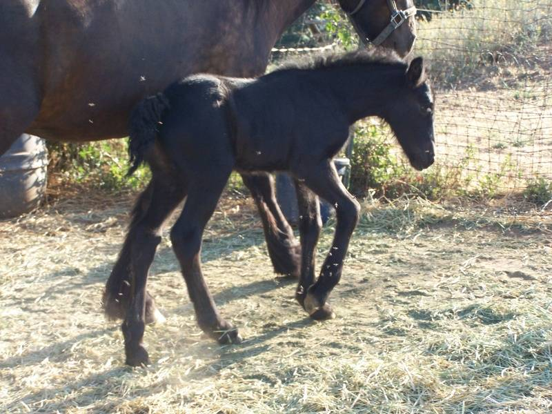 Califia at 1 day old