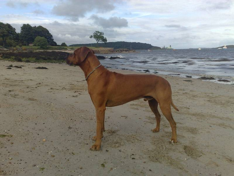 Surveying the coast line for potential play mates